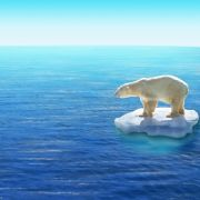Eisbären fressen jetzt Delfine (Foto)