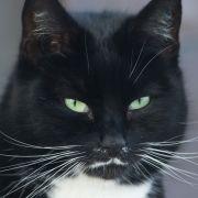 Katzen-Parasit kann schizophren machen (Foto)
