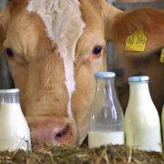 Milchproduktion wächst weltweit (Foto)