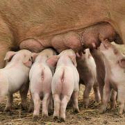 Bauern wehren sich gegen Kritik an ihrer Arbeit (Foto)
