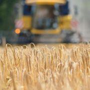 Bauernverband fordert Überprüfung des Russland-Embargos (Foto)