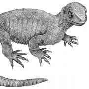 Diese Ur-Schildkröte ist 240 Millionen Jahre alt (Foto)