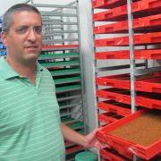 Sterilisierte Fliegen aus Israel gegen Plage in Südeuropa (Foto)