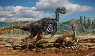 Bizarre Vogelechse: Neue Dinosaurierart in China entdeckt (Foto)