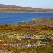 Studie: Auch Pflanzen in arktischer Tundra erhöhen Klimawandel (Foto)