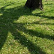Recht auf Sonne? BGH verhandelt über Baumschatten (Foto)