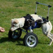 Kurioses aus dem 3D-Drucker:Rollstuhl für behinderte Hündin (Foto)