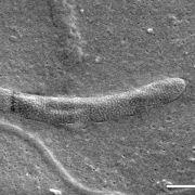 Liefert altes Sperma neue Erkenntnisse über die Evolution? (Foto)