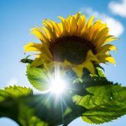 Neue Hitze im Anmarsch - bis 38 Grad am Freitag (Foto)