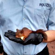 Polizei rettet Frau vor aufdringlichem Nagetier (Foto)