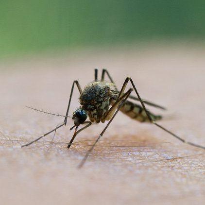 Mücken fernhalten, Mückenstiche lindern - so klappt's am besten! (Foto)