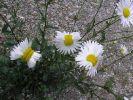Sind die Blumen durch radioaktive Strahlung mutiert? (Foto)