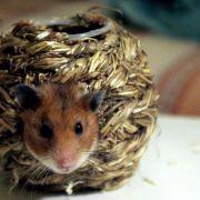 Schöner wohnen hilft auch Hamstern (Foto)
