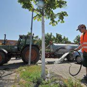 Braune Kronen: Die Trockenheit lässt Stadtbäume leiden (Foto)