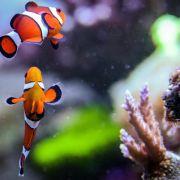 CO2-Emissionen lassen Meere dauerhaft versauern (Foto)