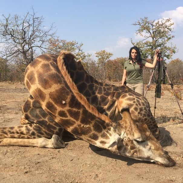 Trophäenjagd: Erste Verbote als Reaktion auf Cecils Tod (Foto)