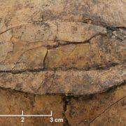 Hinweise auf steinzeitlichen Massenmord bei Frankfurt (Foto)