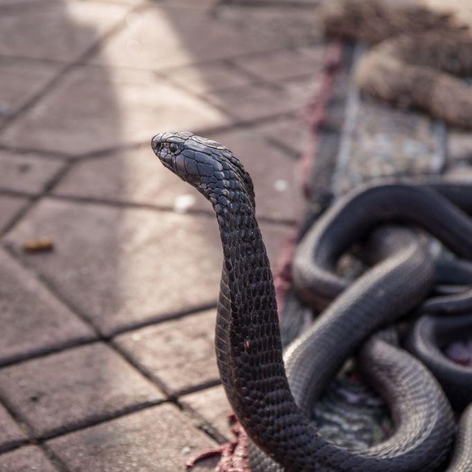 Top 10 der dümmsten Arten zu sterben (Foto)