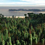 Ältester Wald der Welt soll im Bergischen Land gestanden haben (Foto)