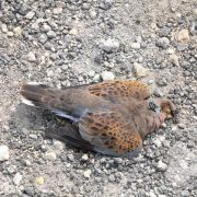 Illegale Jagd kostet Millionen Vögel das Leben (Foto)
