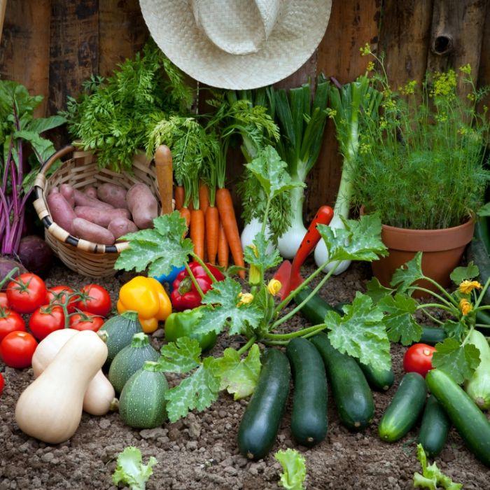 Diese Gemüsesorten können lebensgefährlich sein (Foto)