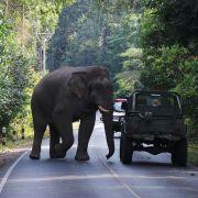 Elefant tötet Trainer und flüchtet mit Touristen auf seinem Rücken (Foto)