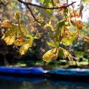 Zum Herbstanfang geht dem Sommer die Puste aus (Foto)