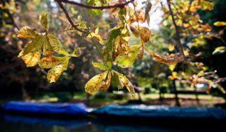 1. Spetember: Der Herbst steht vor der Tür! (Foto)