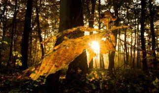 Der Herbst kommt: die schönen und die tristen Seiten. (Foto)