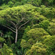 Hochrechnung: Mehr als drei Billionen Bäume auf der Erde (Foto)
