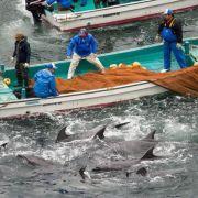 Delfinjagd-Saison in Japan beginnt (Foto)