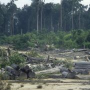 Erde verlor 2014 Waldfläche doppelt so groß wie Portugal (Foto)