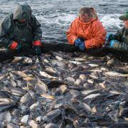 Es wird wieder mehr Fisch in Deutschland verzehrt (Foto)