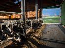 Wie Staub vom Bauernhof vor Allergien schützt (Foto)