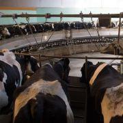 Milchbauern fordern Soforthilfen und Exportoffensive (Foto)