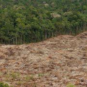 UN-Bericht: Abholzung weltweit deutlich verlangsamt (Foto)