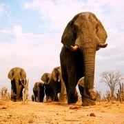 Aggro-Dumbo! Elefant verletzt deutsche Touristen (Foto)