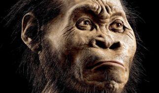So könnte der Homo naledi ausgesehen haben. (Foto)