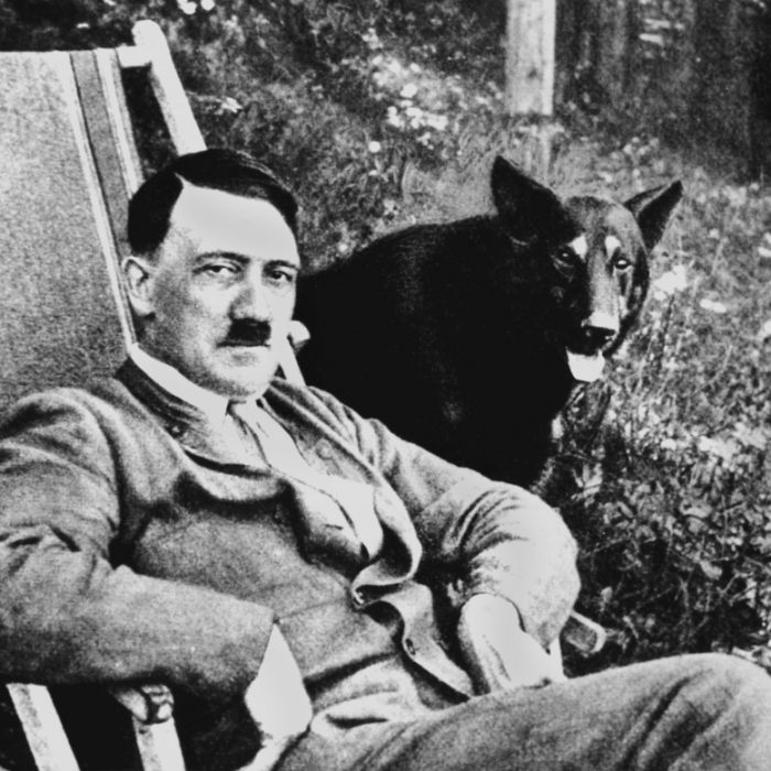 Geheim-Dokument offenbart: War der Führer ein Crystal-Junkie? (Foto)