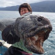 Monster vor Japan: Fischer fängt Seeungeheuer (Foto)