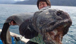 Hiroshi Hirasaka hat einen riesigen Monsterfisch geangelt. (Foto)