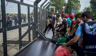Flüchtlinge am Grenzzaun zwischen Serbien und Ungarn. (Foto)
