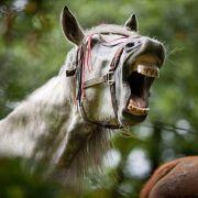 Unglaublich! Pferd beißt Kind den Penis ab (Foto)