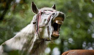 Ein Junge aus der Ukraine musste operiert werden, weil ein Pferd seinen Penis abgebissen hat. (Foto)