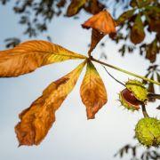 Das wussten Sie noch nicht über den kalendarischen Herbstbeginn (Foto)