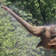So wild treiben es Blauwal, Elefant und Co. (Foto)