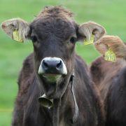 Wegen der Kühe: Mitarbeiter von Veterinäramt erschossen (Foto)
