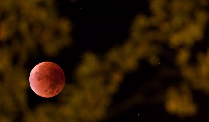 Der Mond scheint am 28.09.2015 in Osnabrück (Niedersachsen) durch das Laub eines Baumes.