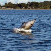 Forscher sicher: Gestrandeter Wal ist seltener Fremder (Foto)