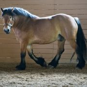 Gestütsbesitzerin wegen Samenklau im Pferdestall angeklagt (Foto)
